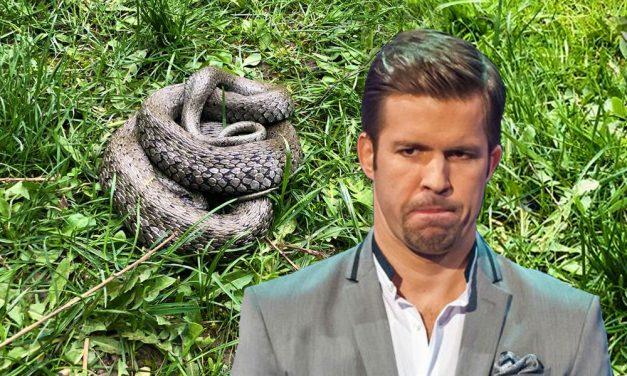 Sebestyén Balázs kígyót találta a házuk udvarán. De milyen kígyó ez?