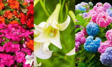 Top 3 árnyéktűrő virág, és a te kerted is színes lesz