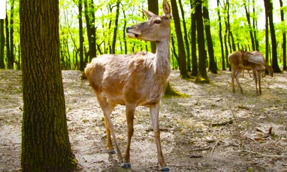 Meglepően sok látogatót néztek meg az őzek a Budakeszi Vadasparkban
