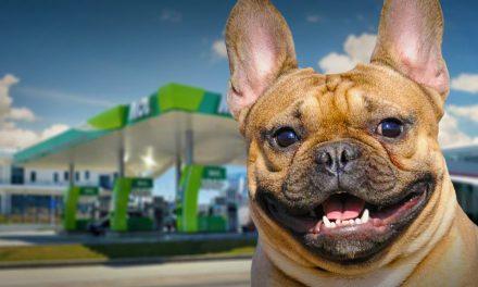 Állatbarát benzinkutak Budapest környékén, ingyenes kutyus mikrochip-leolvasóval