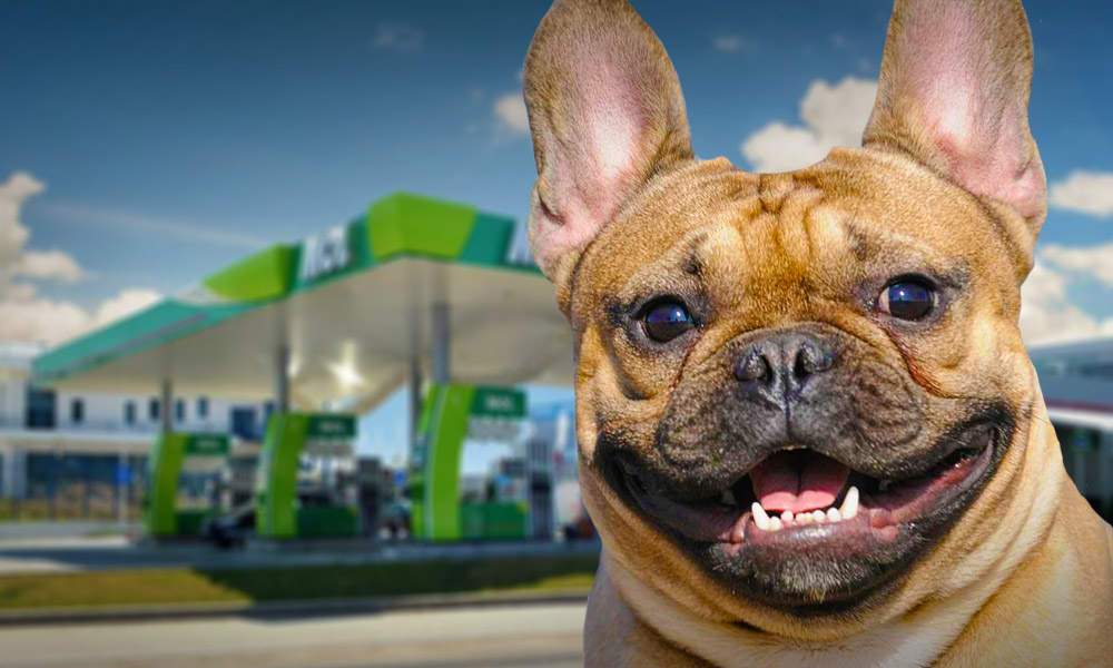 Kutyabarát MOL benzinkút