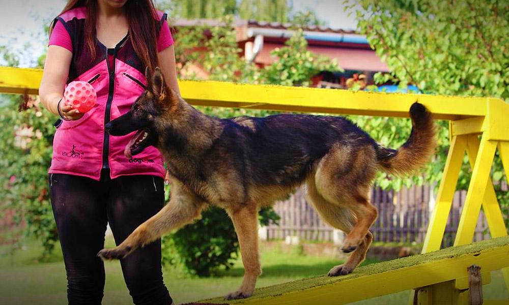 Kutya, agility