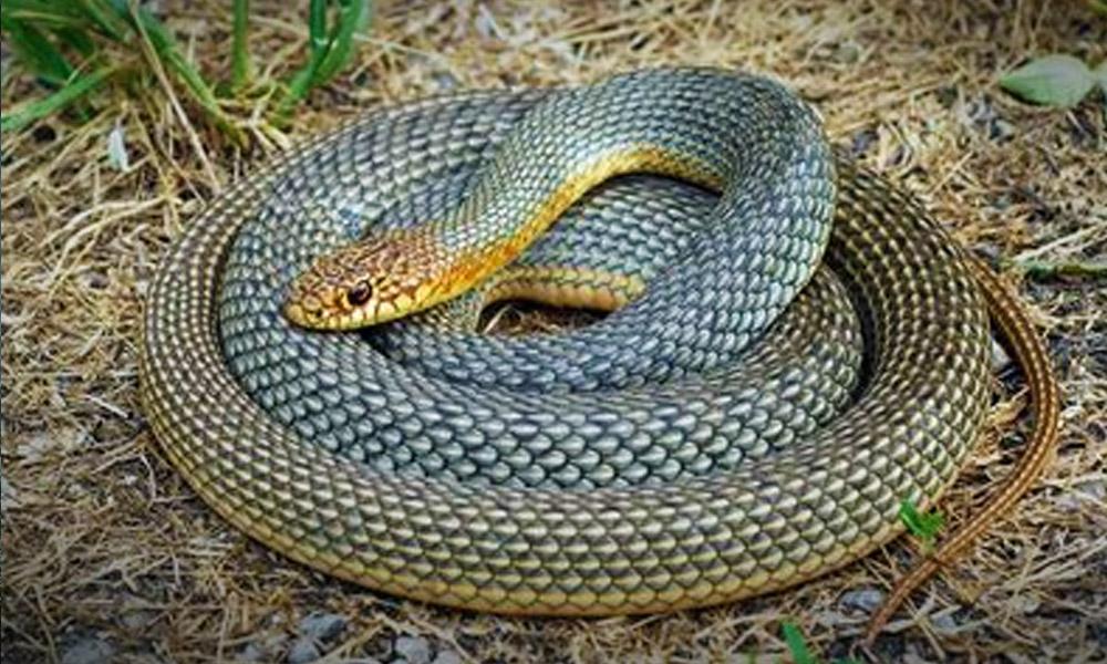 Segítség, kígyót találtam a kertemben! Megmutatjuk melyiktől kell félni