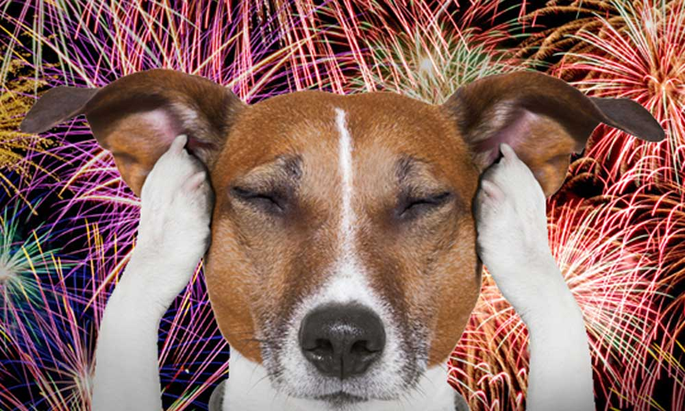 Az állatvédők szerint sokkhatást okoz az állatoknál a tűzijáték