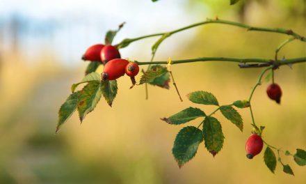 Még kitart a nyár, de napokon belül bekopoghat az ősz az agglomerációba is