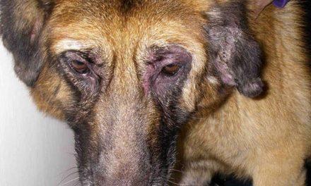 Döbbenetes kegyetlenséggel bánt el a saját kutyájával a férfi, bíróság elé állhat!