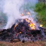 Végleg betiltják az avarégetést Magyarországon, sehol sem lehet kerti hulladékot égetni