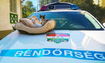 Büszke rendőrkutyákkal kiscicákat mentettek meg Dunakeszin – Fotók!