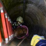 Keservesen nyüszített a kútba zuhant kutyus, aztán jöttek a tűzoltók