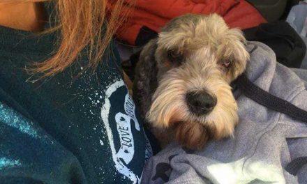 Szennyvízben fuldokolva találták meg az Alma együttes kedvenc kutyáját