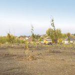 Ilyent is ritkán hallani: 1000 darab fát ültetnek a város szívébe!