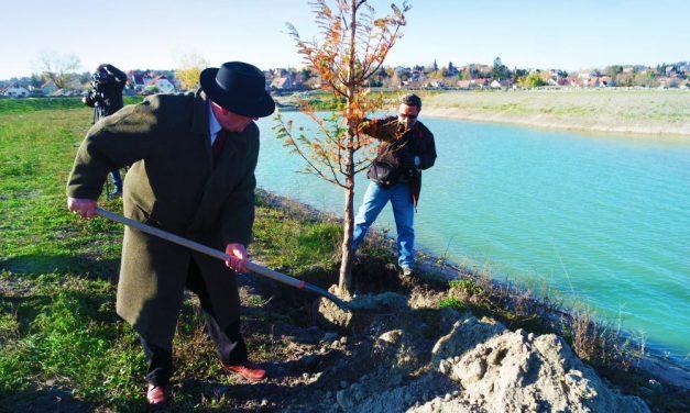 Meglepő! Mammutfenyőket ültetett az érdi polgármester