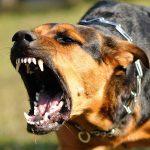 Majdnem széttépték a szomszéd kutyái a férfit, az agresszív állatok gazdáját most elítélte a bíróság