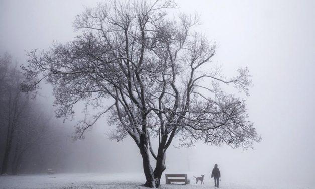 Nagy a baj a Budapest környéki erdőkben, életveszély miatt lezártak egy népszerű kirándulóhelyet, a zúzmarától pedig kockázatos az erdőjárás