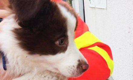 Nagy szemekkel bámuló kiskutyát mentettek a budaörsi mentősök