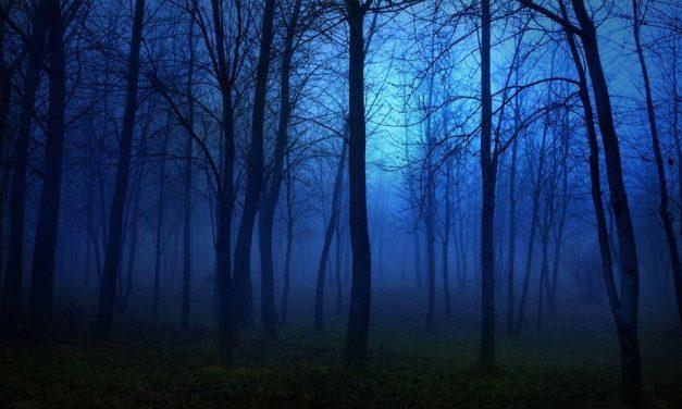Bepánikoltak az erdőben és hívták a rendőrséget, pedig a főváros közelében voltak