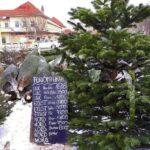 Fenyőfa vásár az agglomerációban – Itt vannak az árak és a három legnépszerűbb fajta