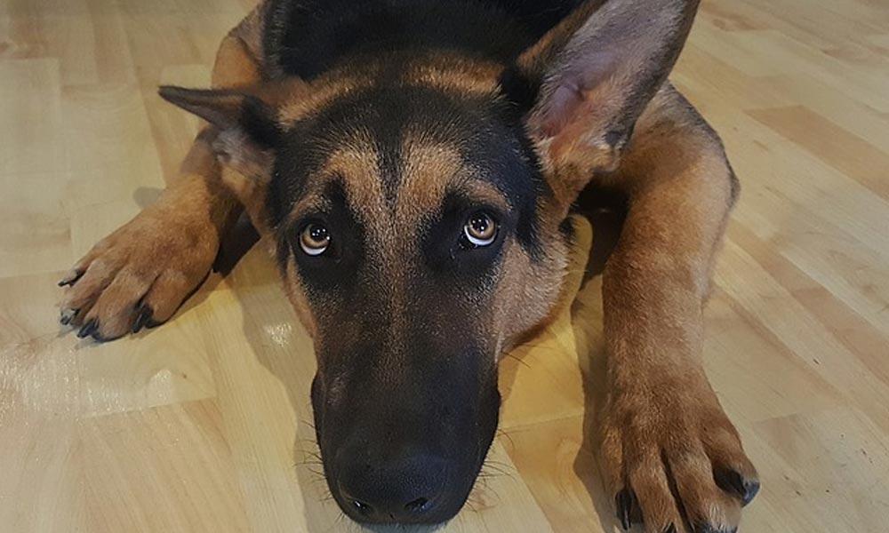 Az ideges kutyáknak nyugtatót kell adni szilveszterkor – mondja egy állatvédő