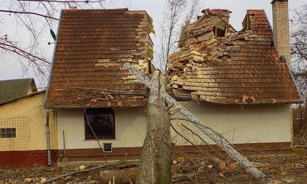 Perpatvar az óriási fával kettévágott ház körül