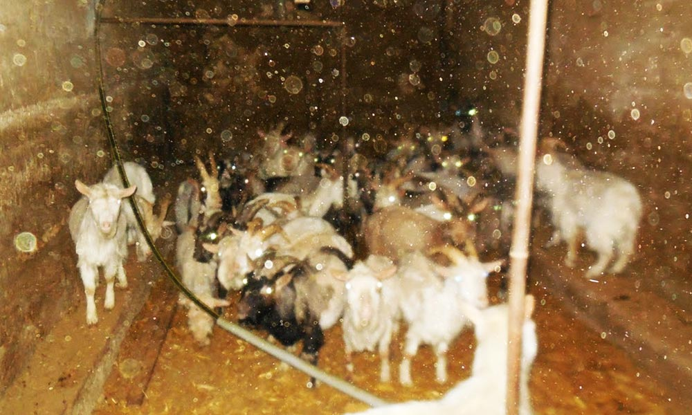 Állatkínzás miatt elítéltek egy érdi férfit, döbbenetes körülmények voltak nála