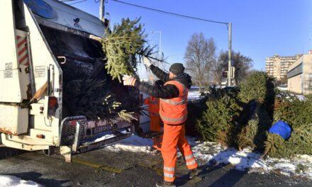 Rajtad múlik, hogy a kidobott karácsonyfádat lehet-e hasznosítani
