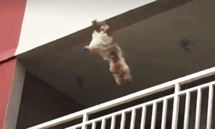 Nem élte túl a kutya az öt emeletnyi zuhanást, elítélték azt a férfit, aki kidobta