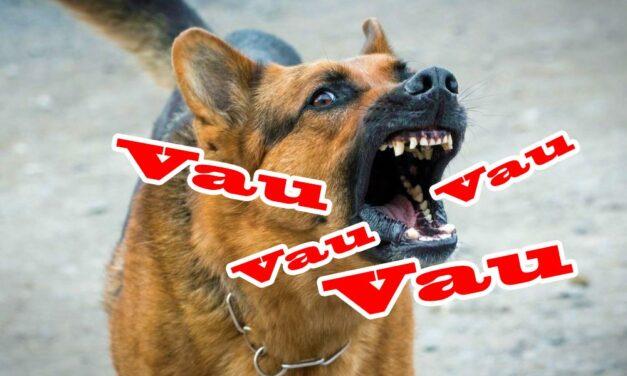 Elég volt a kutyaugatásból! Az ELTE kutatói az ugatás bosszantó hatásait vizsgálták