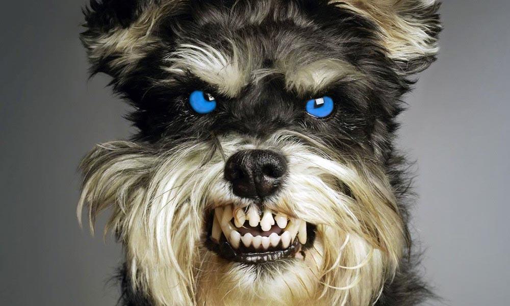 Klónozott házőrző kutyák ugathatnak Budapest környékén is