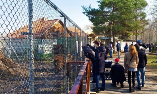 Balhé a Veresegyházi Medveotthonban: a jelenlegi vezetés nem adja át a macikat az önkormányzatnak