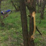 Egy halott motorosra bukkant az anya a gyermekével egy erdőben