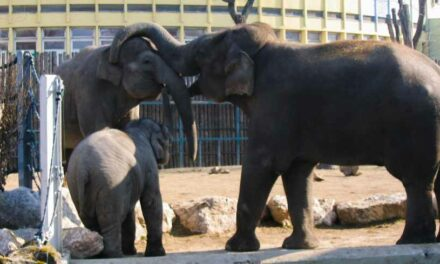 A fővárosi állatkert az európai élmezőnyben van egy értékelés szerint
