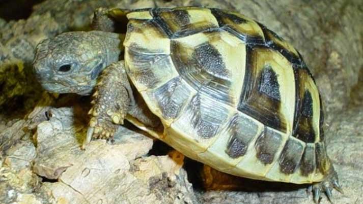 Állatkínzás miatt indult nyomozás az budapesti állatkertben