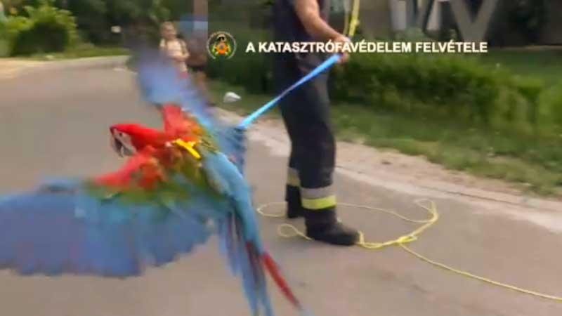 Trükkös módon mentettek meg a tűzoltók egy arapapagájt (Videó)