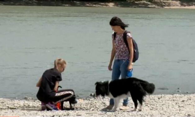 A koronavírus miatt különösen óvatosan bánjunk az idegen kutyákkal – mondja az érdi állatorvos