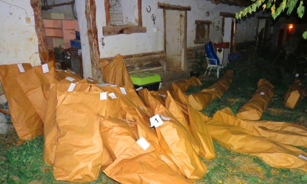 Ház nagyságú kábítószer alapanyagot találtak egy udvarban – Látványos fotók