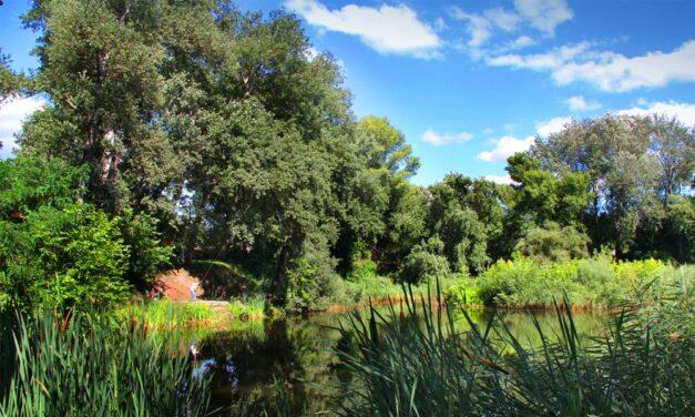 Gödi feneketlen-tó: Meglepő dolgok történtek a környéken