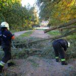 Fákat döntött ki a szélvihar az északi agglomeráció településein