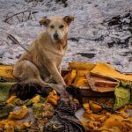 150 ezer forintra büntethetik a kóborló kutyák gazdáit