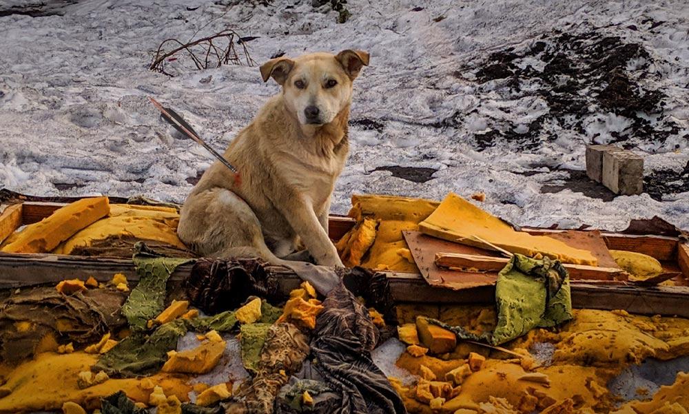 Állatkínzás: nyíllal löttek át két kutyát az agglomerációban