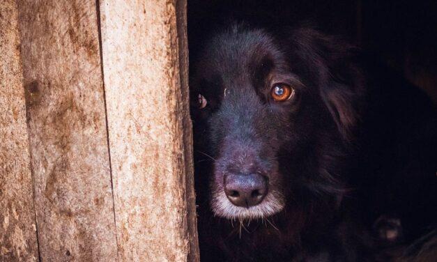 Halálra rémülhetnek a kutyák a szilveszteri petárdáktól az állatvédők szerint