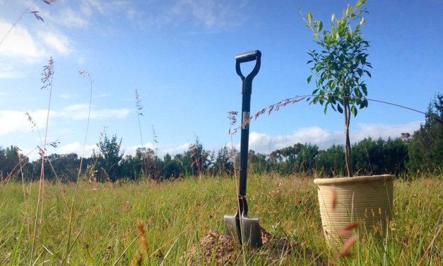 Zöld Csepel: Fontos emberek lapátoltak, faültetésben első helyen van Csepel a kerületek között