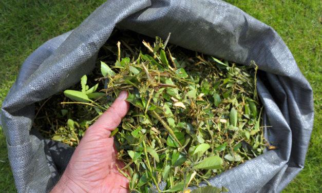 Tavaszi zöldhulladékok a kertben: így gyűjtsük őket 2020-ban!