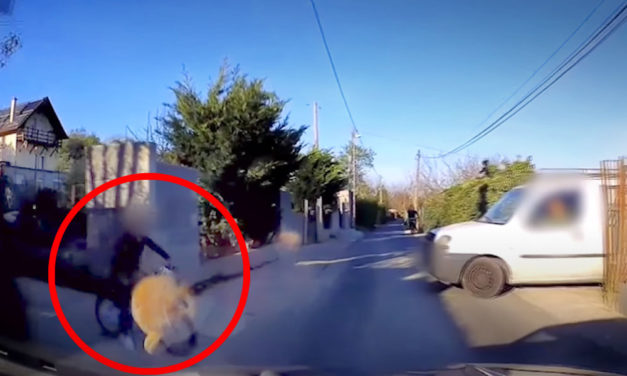 Az autó elé biciklizett a kisrác, nem figyeltek rá a szülei, nagy szerencséje volt, hogy megúszta