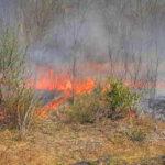 Lángok az agglomerációban: Budaörsnél erdő, Dabasnál cserjés égett