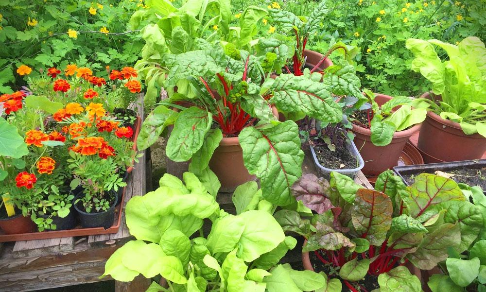 Kertészkedjen, aki boldogságra vágyik, de a palántázást nem kell elkapkodni