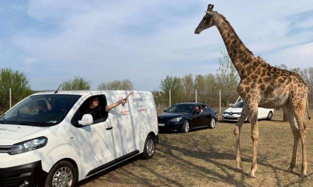 Az agglomerációban nyílik Magyarország első szafari parkja