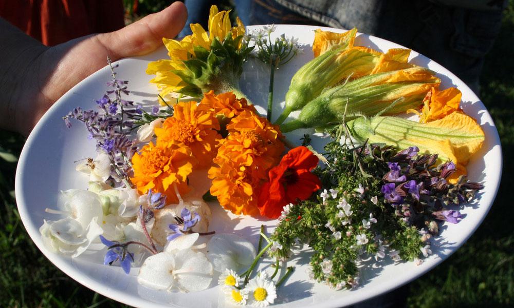 Ehető virágok az asztalon! Így nevelhetsz káprázatosan szép finomságokat a balkonládában