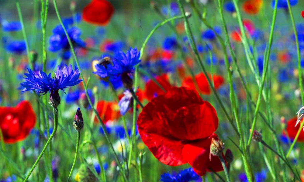 Ne félj a méhektől, nagyon hasznosak! Így csalogathatod őket a kertbe