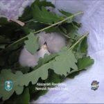 Védett madárfiókákat loptak, Tahitótfaluban csaptak le rájuk