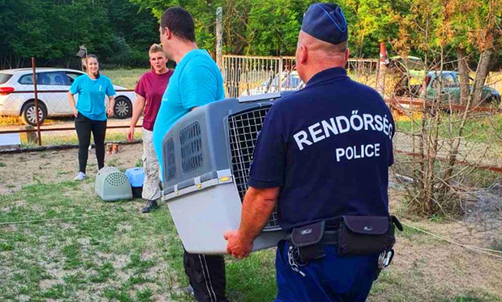 Éheztette és láncon tartott több kutyát egy férfi – a rendőrök is ledöbbentek